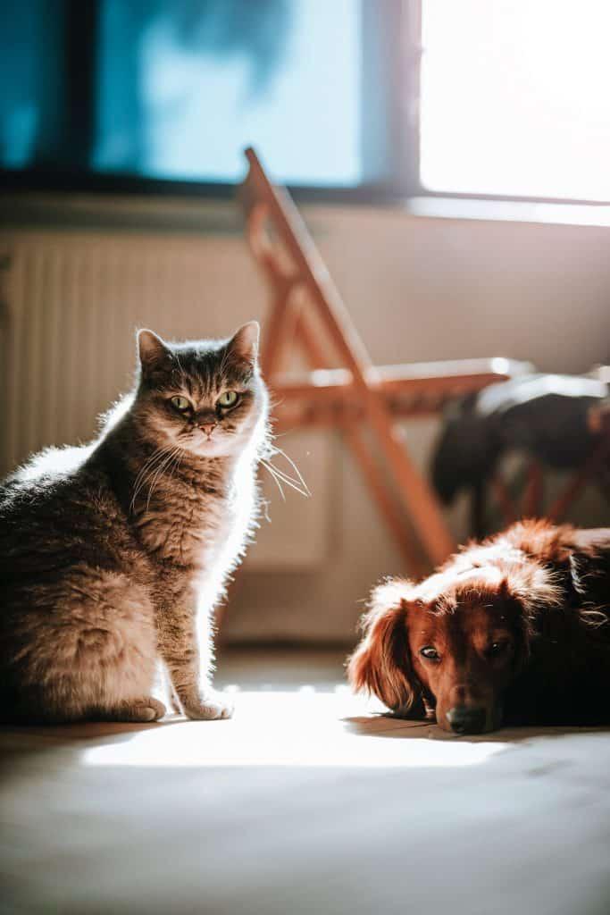 Tiefgründige Fragen: Katze oder Hund?